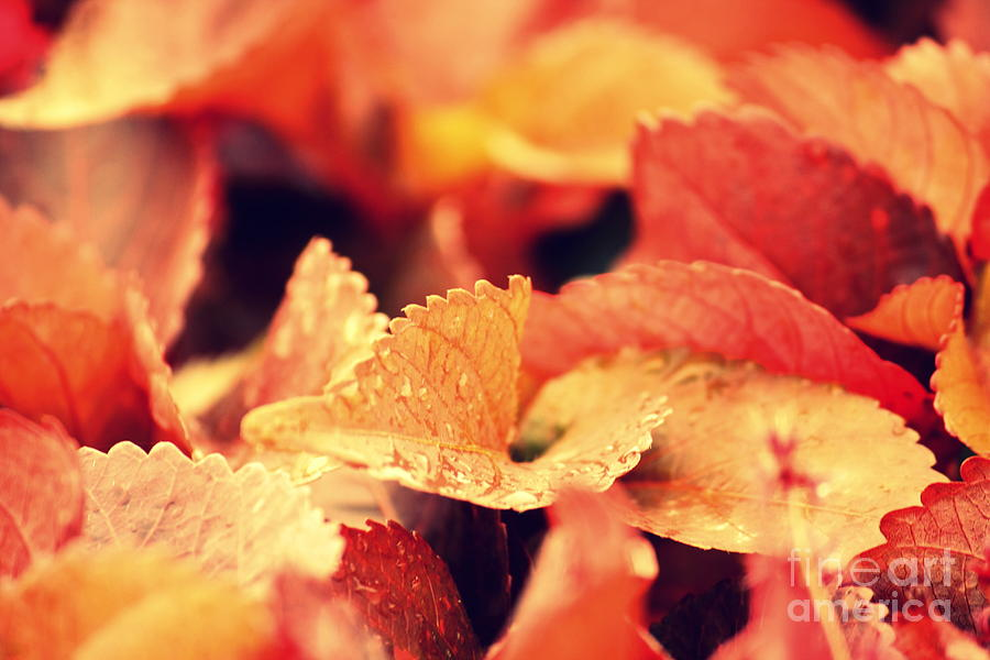 Red Photograph - Colour Me Red by Vishakha Bhagat