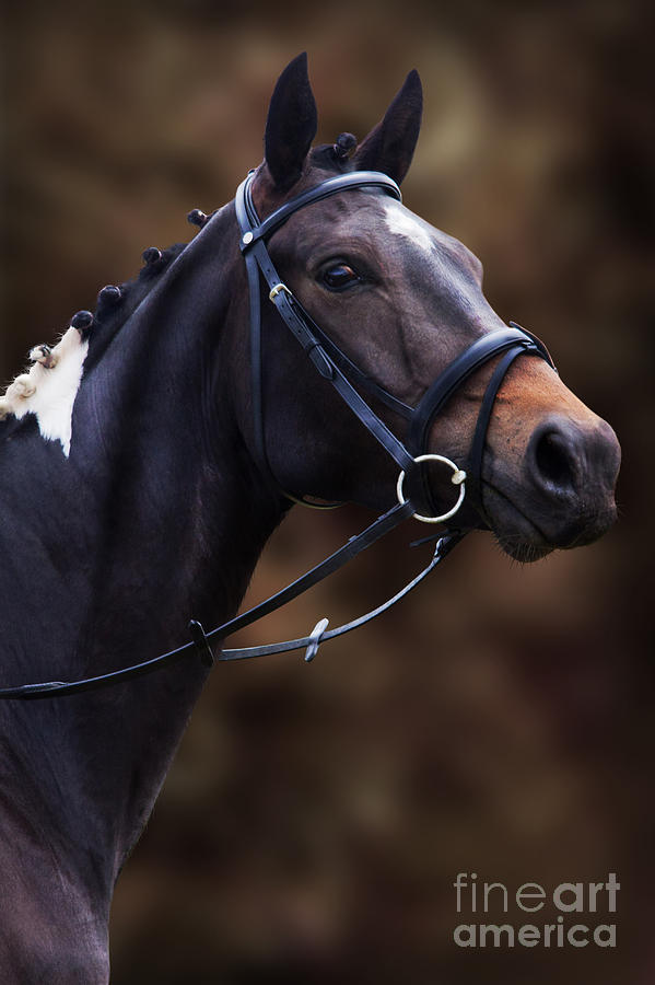 Pinto Photograph - Coloured Show Horse by Ethiriel  Photography