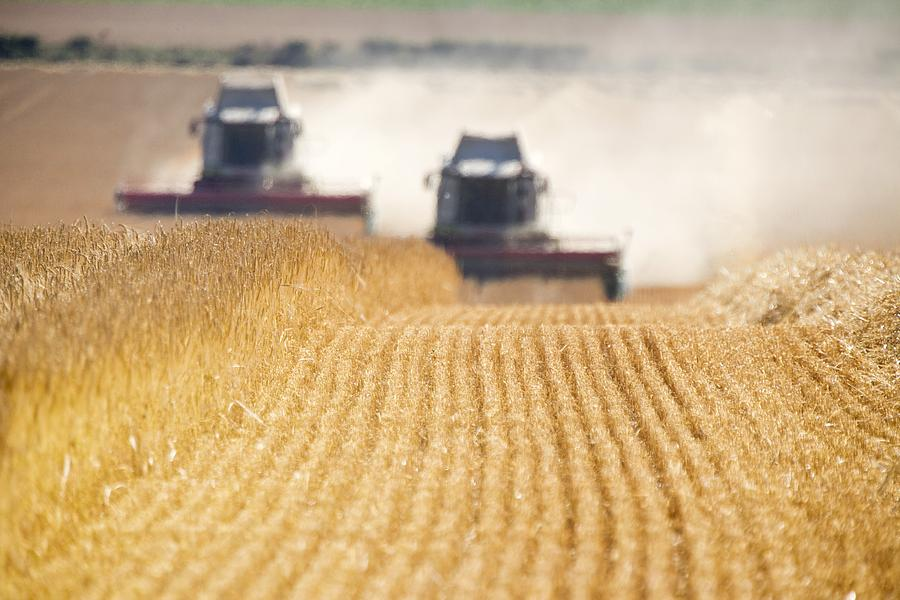 Crop Photograph - Combines Harvesting Field, North by John Short