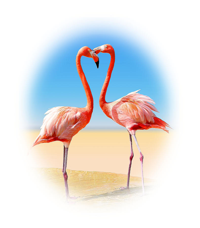 Flamingo Photograph - Come Fly With Me by Kristin Elmquist