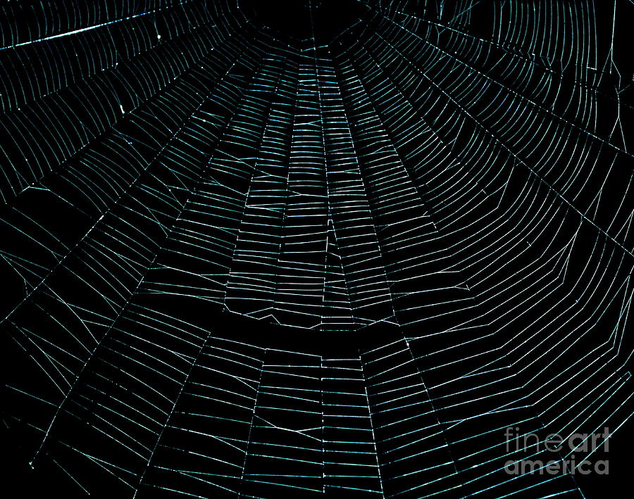 Spider Web Photograph - Come Into My Web by Monica Poole