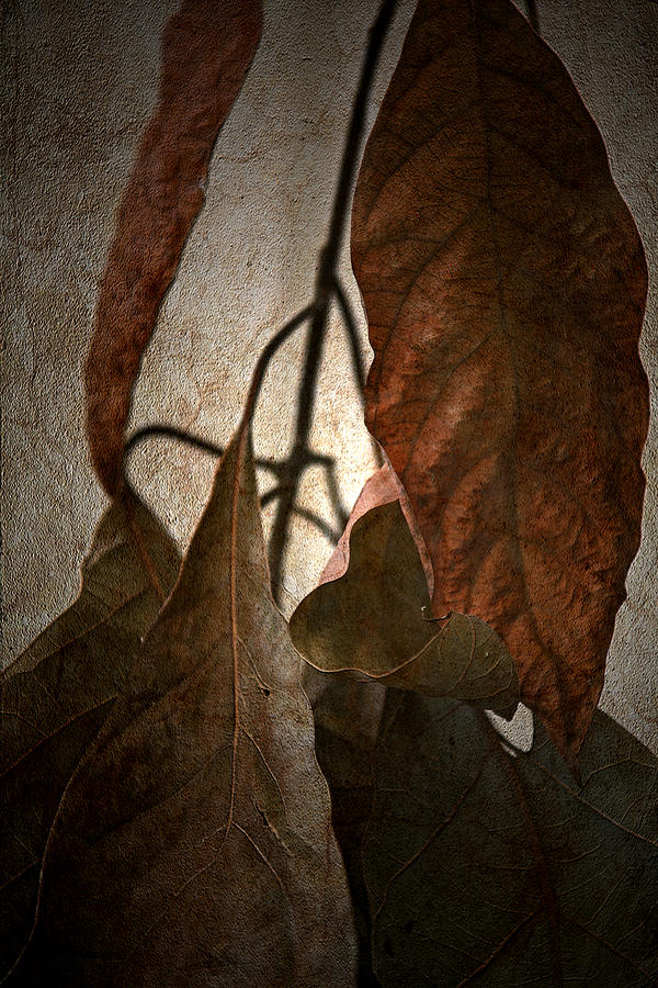 Autumn Photograph - Comfort by Bonnie Bruno