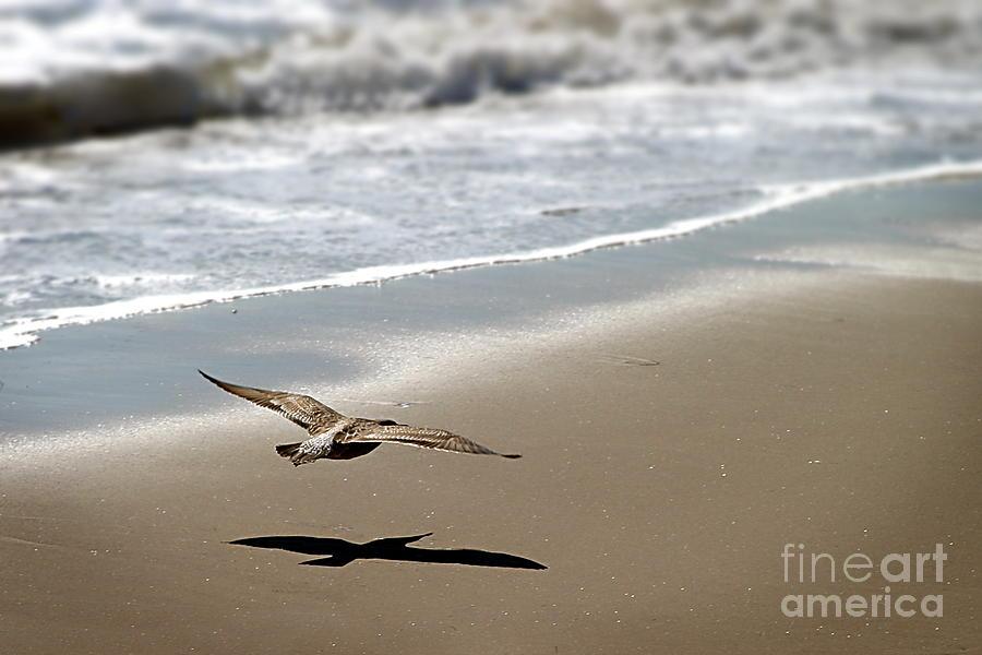 Seagull Photograph - Coming In For Landing by Henrik Lehnerer