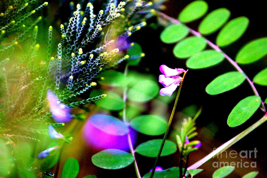 Flowers Photograph - Coming Too Life by Bret Worrell