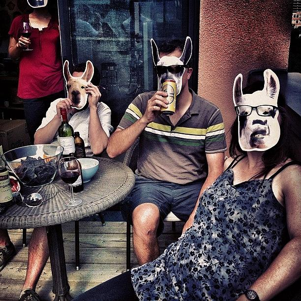 Toronto Photograph - ¿como The Llamas? by Marayna Dickinson