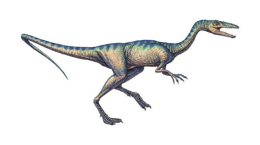 Compsognathus Longipes Photograph - Compsognathus Dinosaur, Computer Artwork by Joe Tucciarone