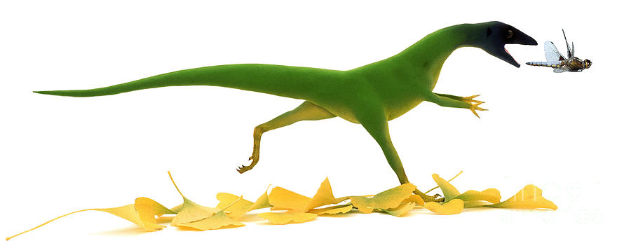 Dinosaur Drawing - Compsognathus by Jane Burton and Warren Photographic and Photo Researchers