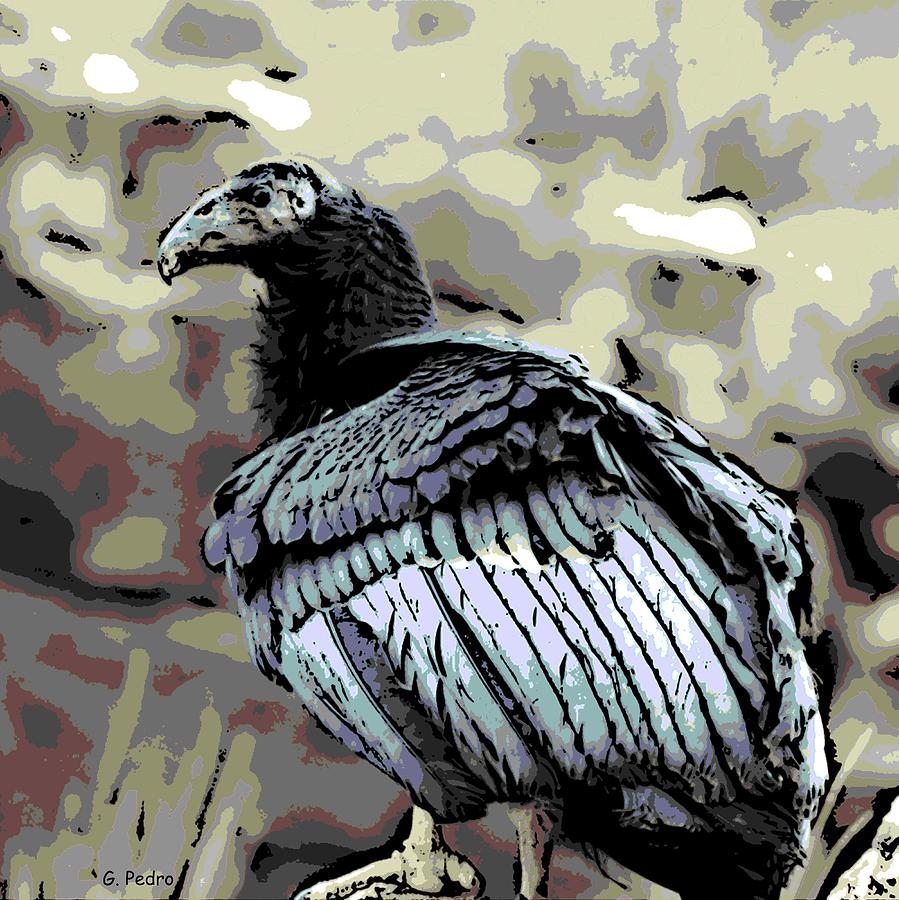 Condor Photograph - Condor Profile by George Pedro