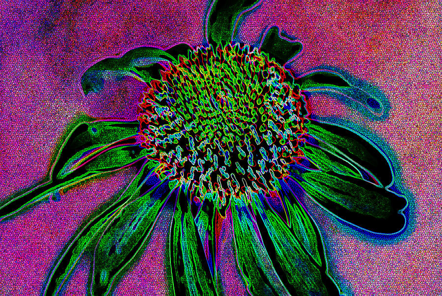 Abstract Photograph - Coneflower by Simone Hester