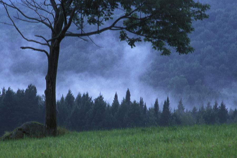 Country Photograph - Coniferous Trees Early In The Morning by David Chapman