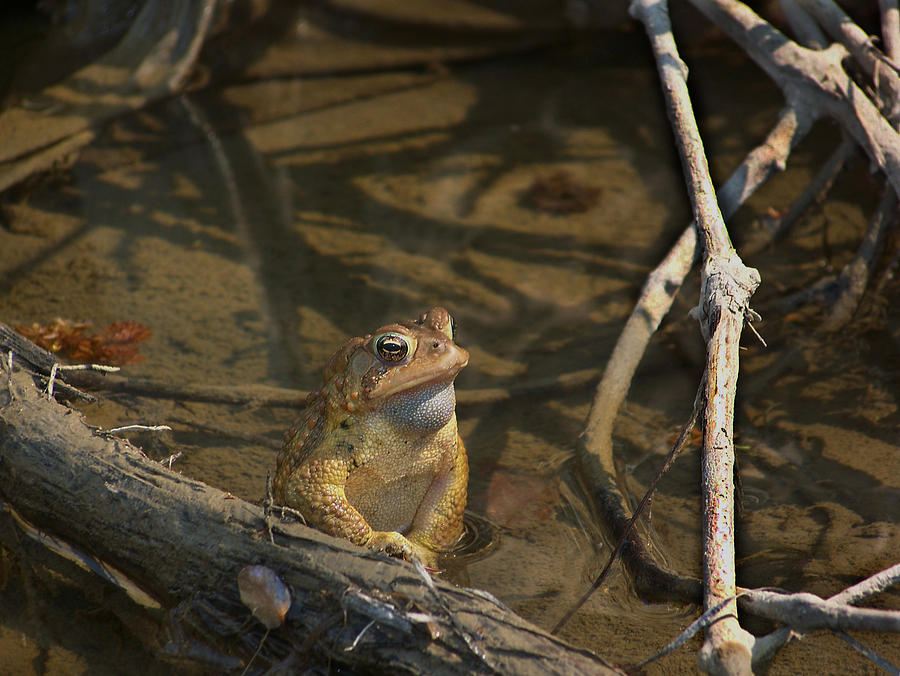 Toad Photograph - Content by Natalie Long