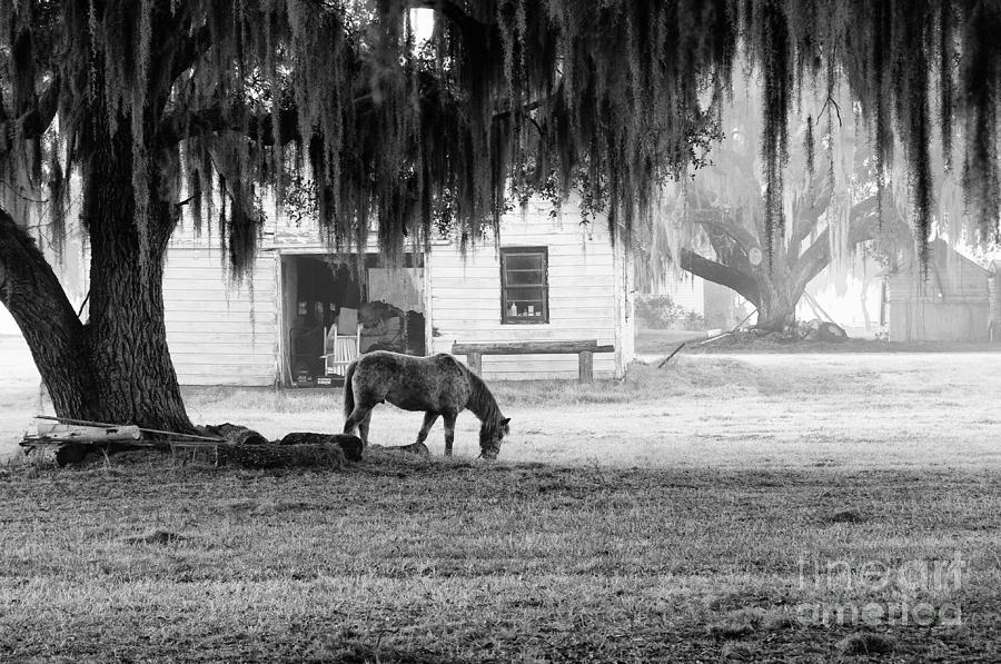Horse Photograph - Coosaw - Grazing Free by Scott Hansen