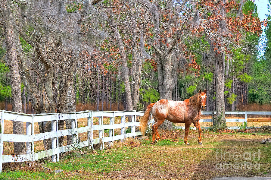 Equestrian Photograph - Coosaw - Outside The Fence by Scott Hansen