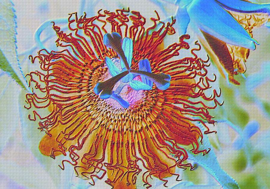 Flower Photograph - Copper Passionflower by Rosalie Scanlon