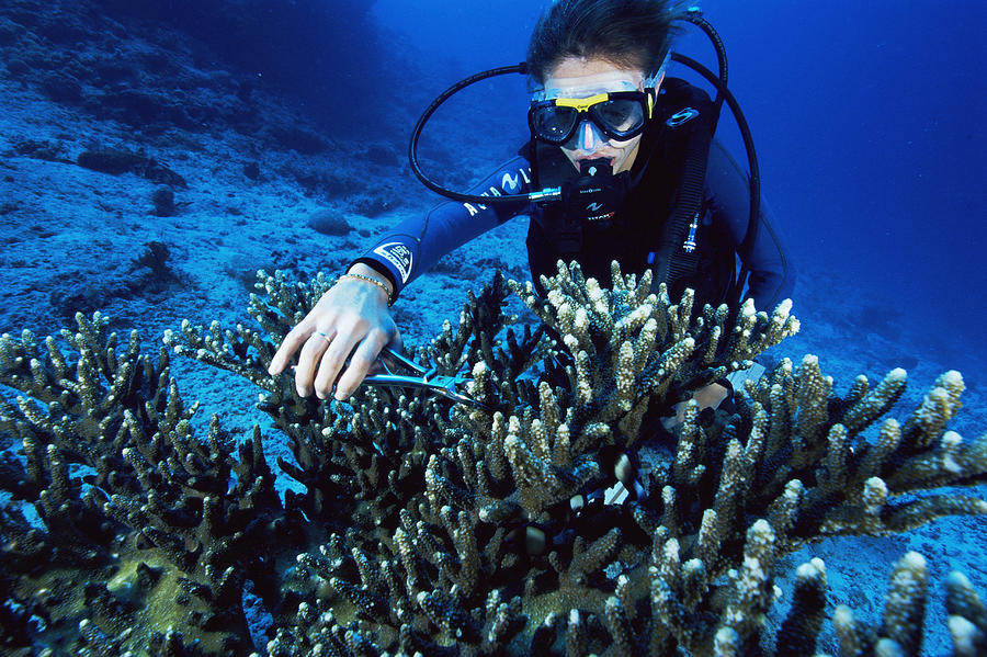 Animal Photograph - Coral Research by Alexis Rosenfeld
