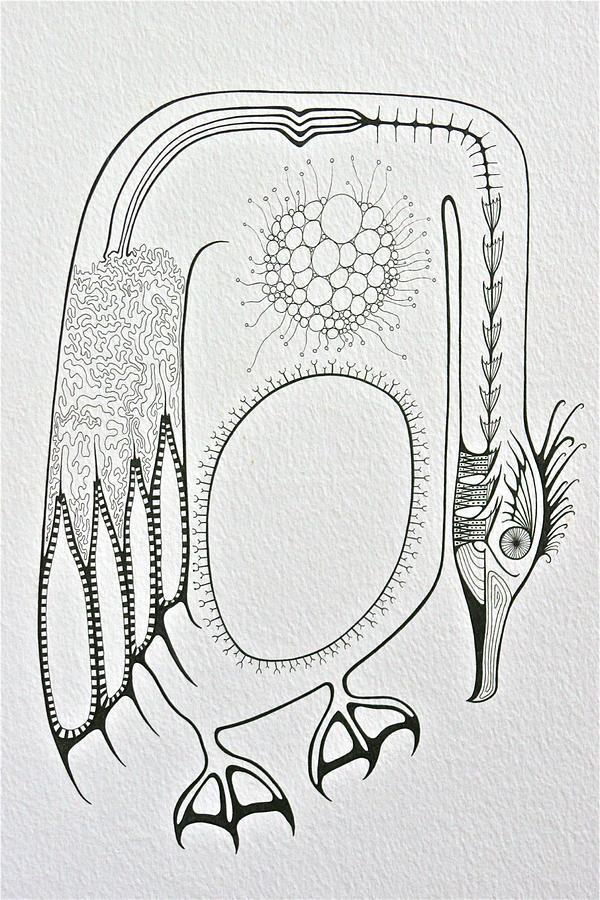 Cormorant Drawing - Cormorant by Antonio Casu