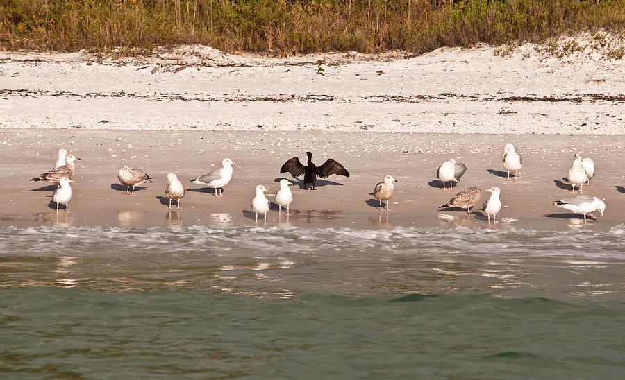 Sea Birds Photograph - Cormorant Stands Out by Christine Stonebridge