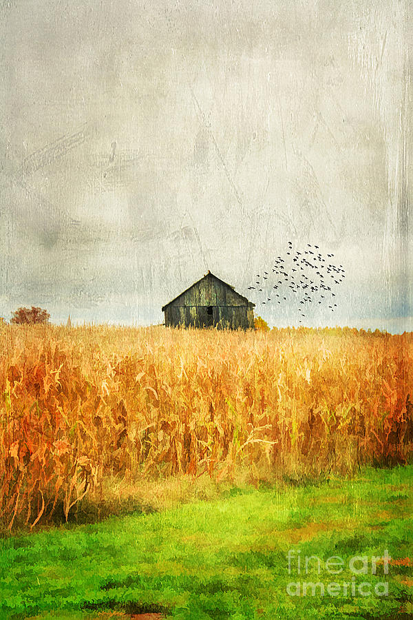 Aged Photograph - Corn Fields Of Kentucky by Darren Fisher