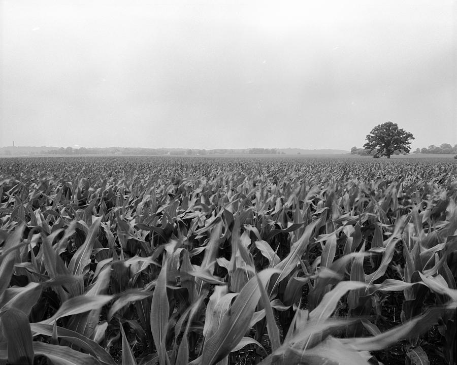 Wisconsin Photograph - Corn Flakes On The Stem by Jan W Faul