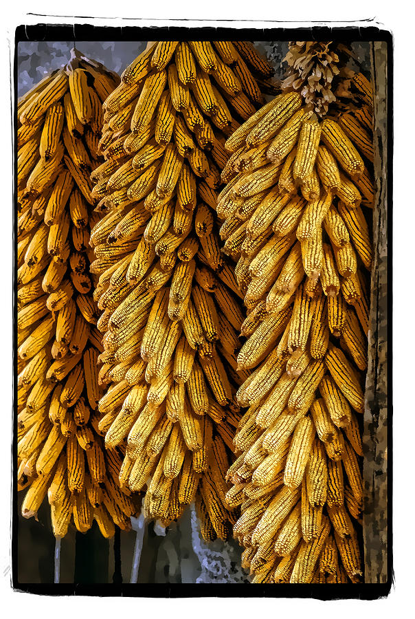 Art Pyrography - Corn  by Mauro Celotti