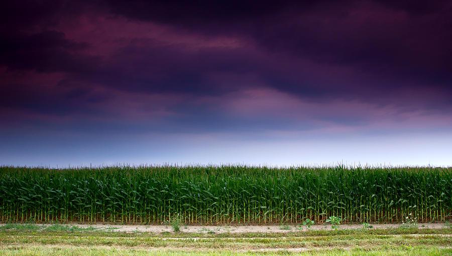 Corn Row Photograph