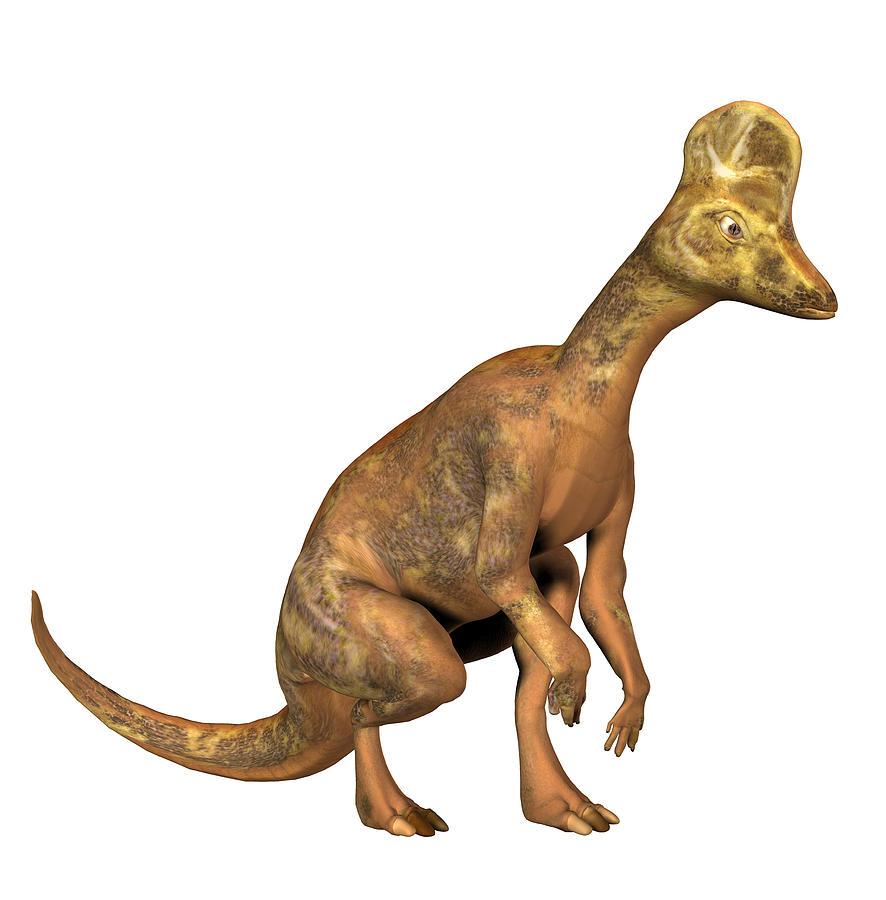 Hadrosaur Photograph - Corythosaurus Dinosaur by Friedrich Saurer