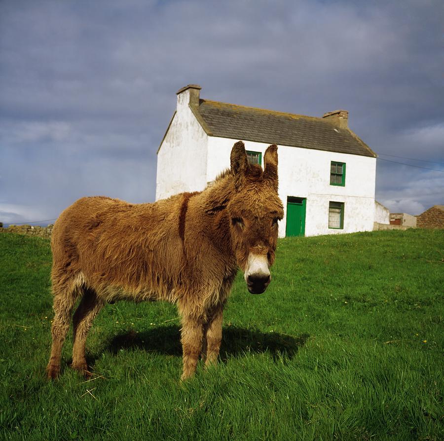 cottage and donkey tory island photograph by the irish image