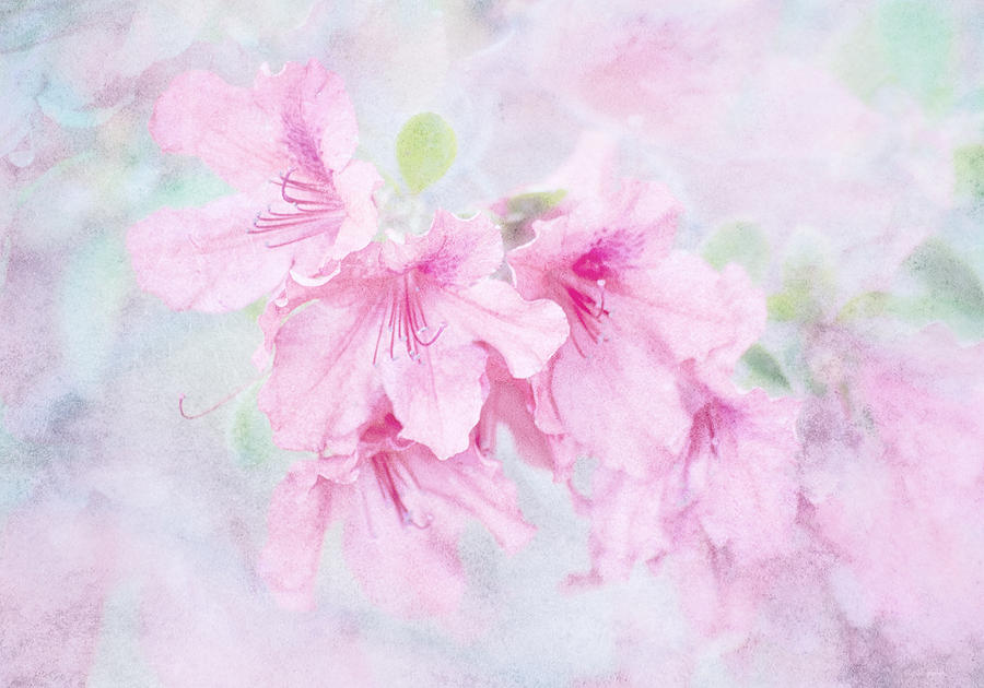 Floral Photograph - Cotton Candy by Brenda Bryant