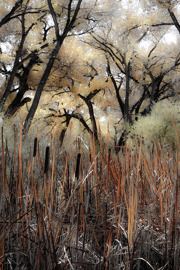 Cat Tails Photograph - Cottonwoods And Cat Tails by Denice Breaux