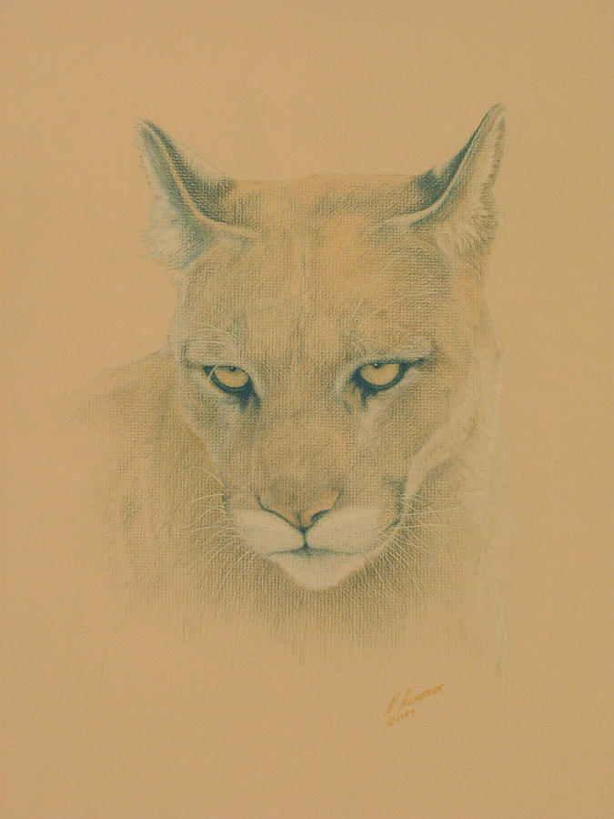 Cougar Drawing - Cougar by Norm Holmberg