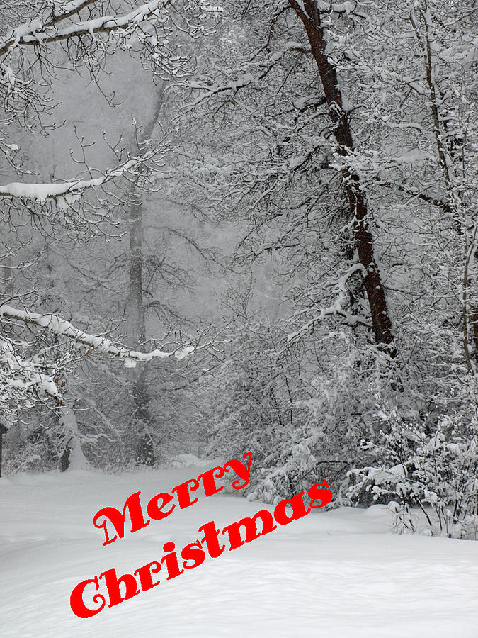 Christmas Photograph - Country Christmas 1 by DeeLon Merritt