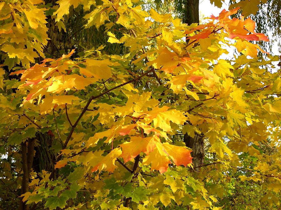 Autumn Photograph - Country Color 10 by Will Borden