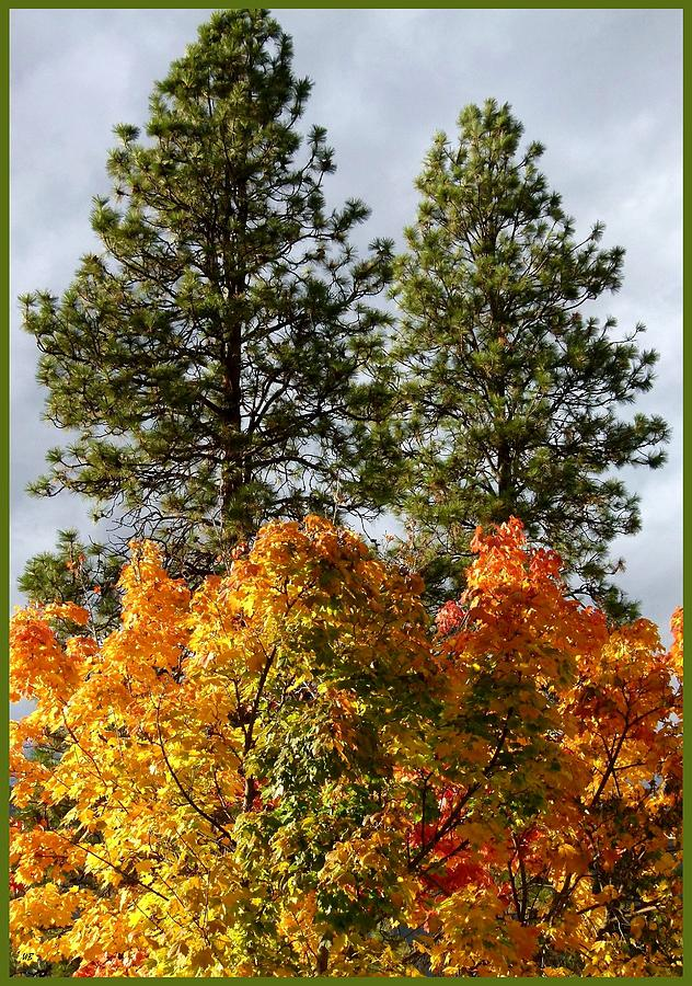 Autumn Photograph - Country Color 24 by Will Borden