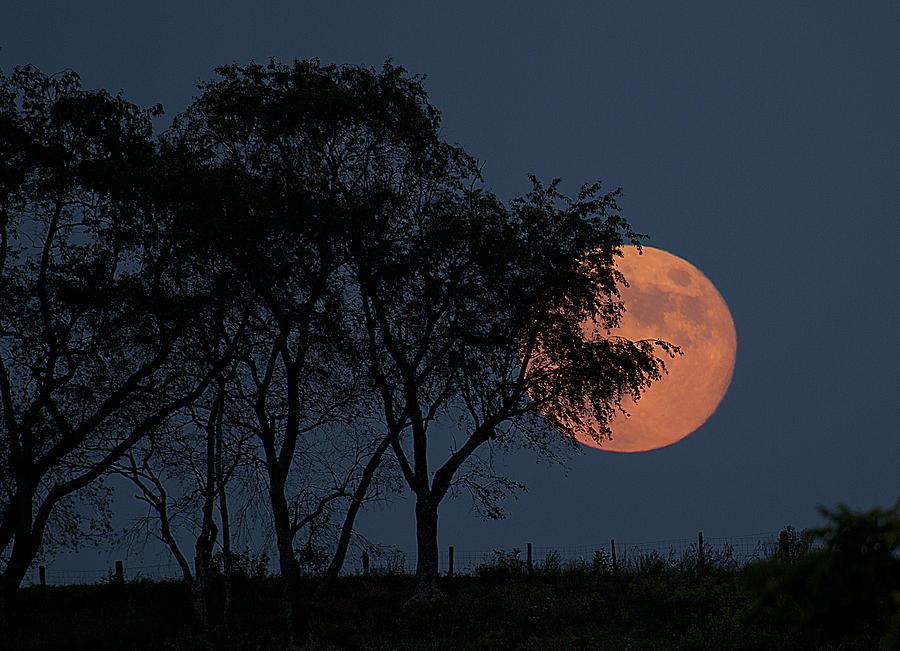 Moon Photograph - Country Moon  by Betsy Knapp