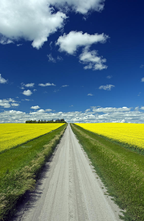 Blooming Photograph - Country Road With Blooming Canola by Dave Reede