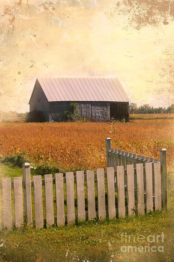 Countryside Photograph - Countryside Life by Sophie Vigneault