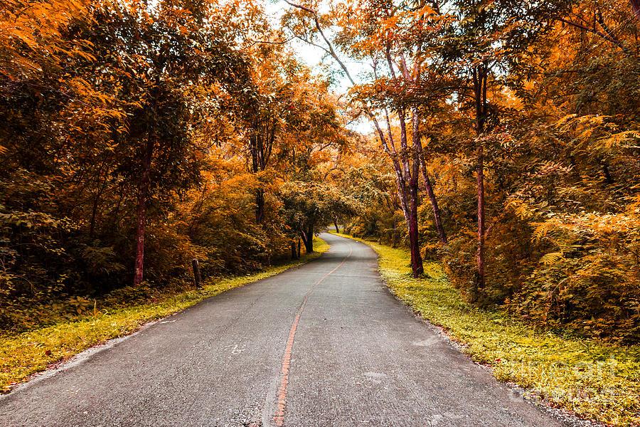 Autumn Photograph - Countryside Road In Autumn by Mongkol Chakritthakool