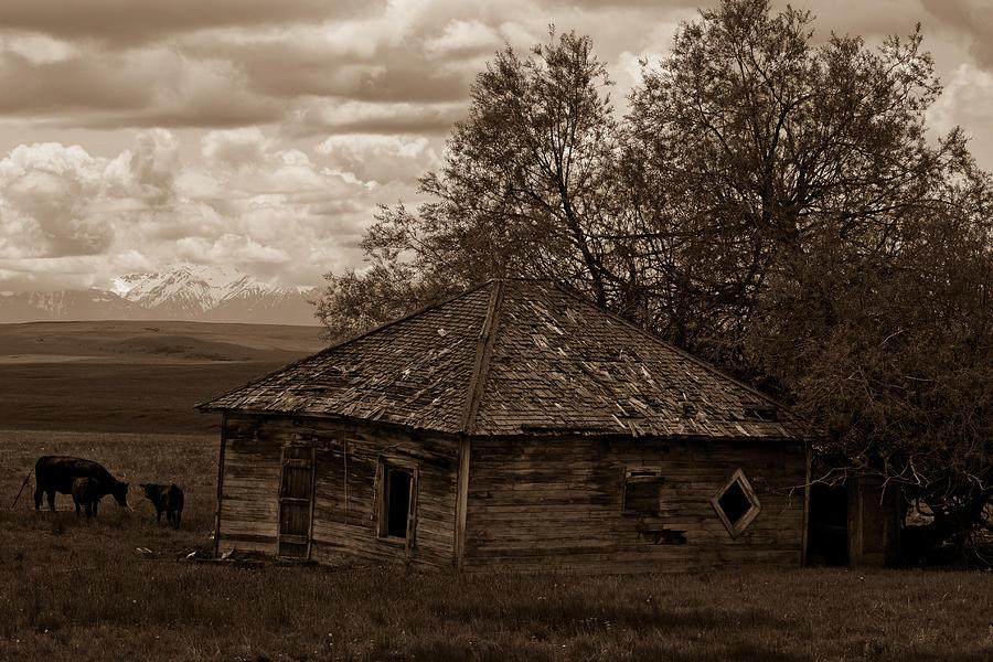 Eastern Oregon Photograph - Cow House by Jen TenBarge