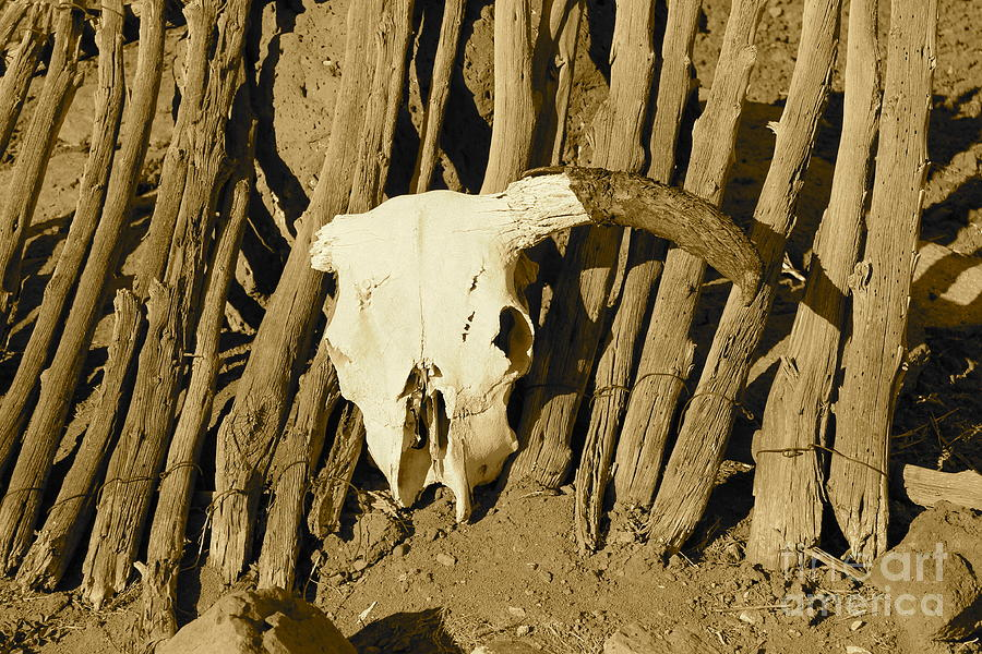 Cow Photograph - Cowskull - Sepia by Pamela Walrath