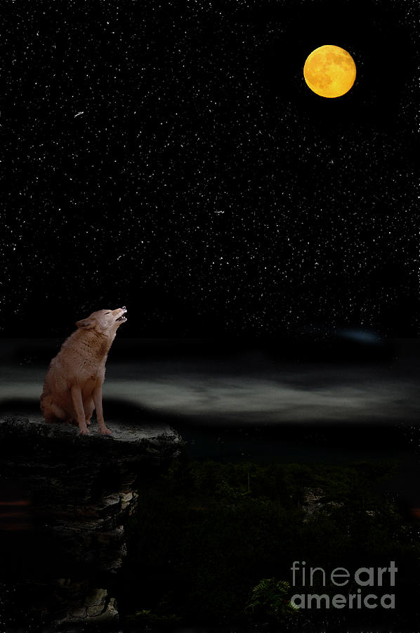 Coyote Howling At Moon Photograph by Dan Friend  Coyote Howling ...