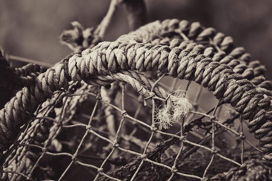 Crab Photograph - Crab Cage by Justin Albrecht