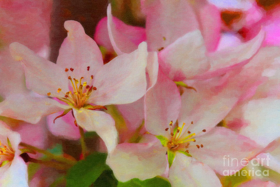 Crabapple Floral Paint Photograph by Donna Munro