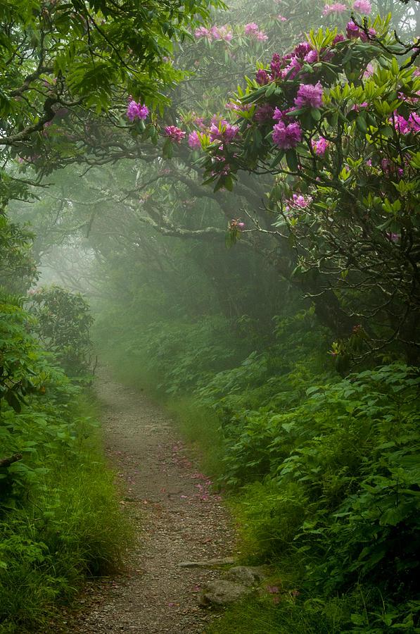 Great Smoky Mountains Photograph - Craggy Path 2 by Joye Ardyn Durham