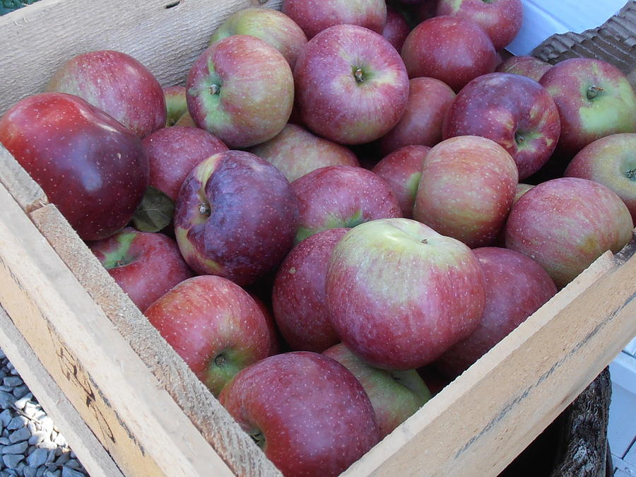 Apples Photograph - Crate Of Apples by Kimberly Perry