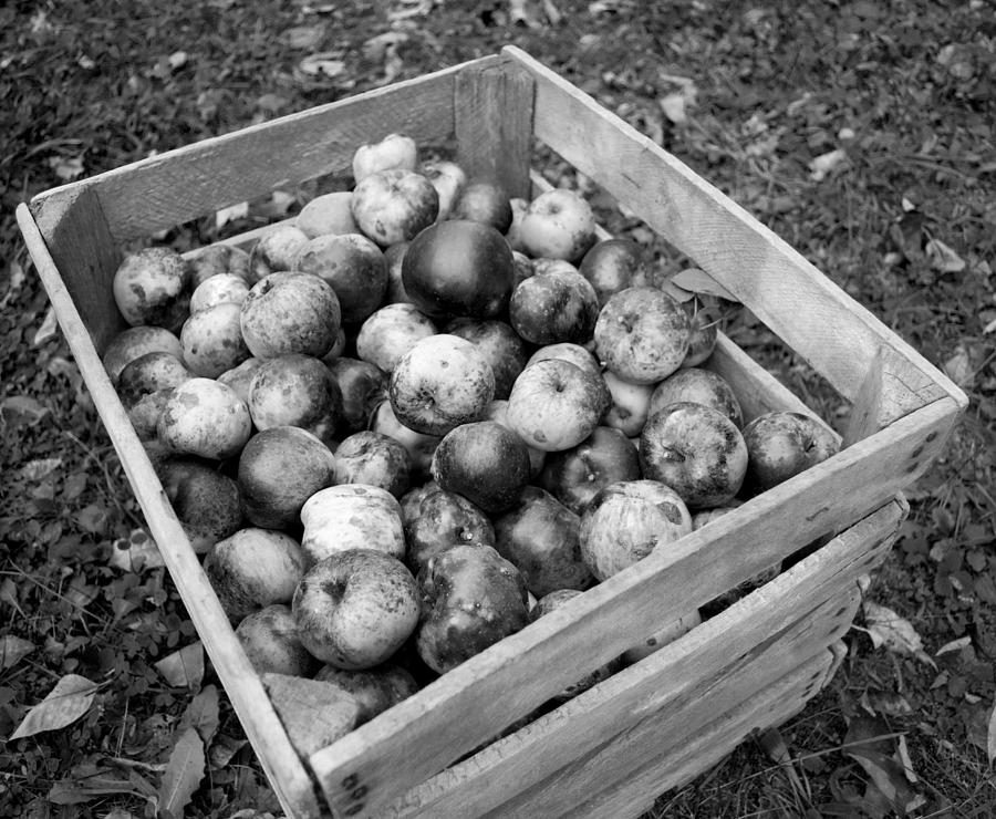 Apples Photograph - Crate Of Wellness by Michael Jalbert