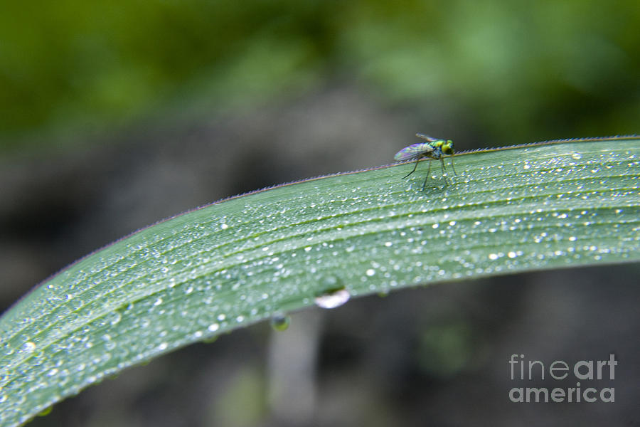 Grass Photograph - Crawling Along by Darleen Stry