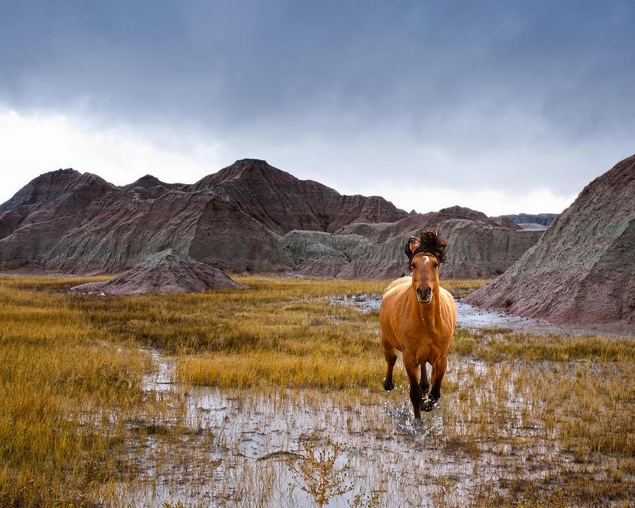 Landscape Photograph - Crazy Horse by Ron  McGinnis