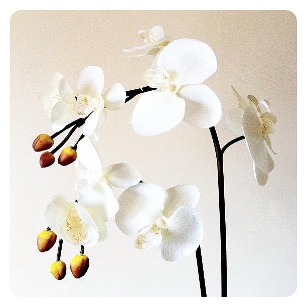 Plant Photograph - Cream by Mark B