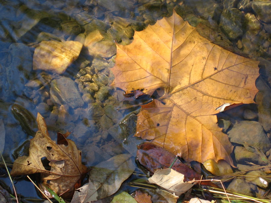 Creek Abstract No. 1 Photograph by Lenie Czarniecki