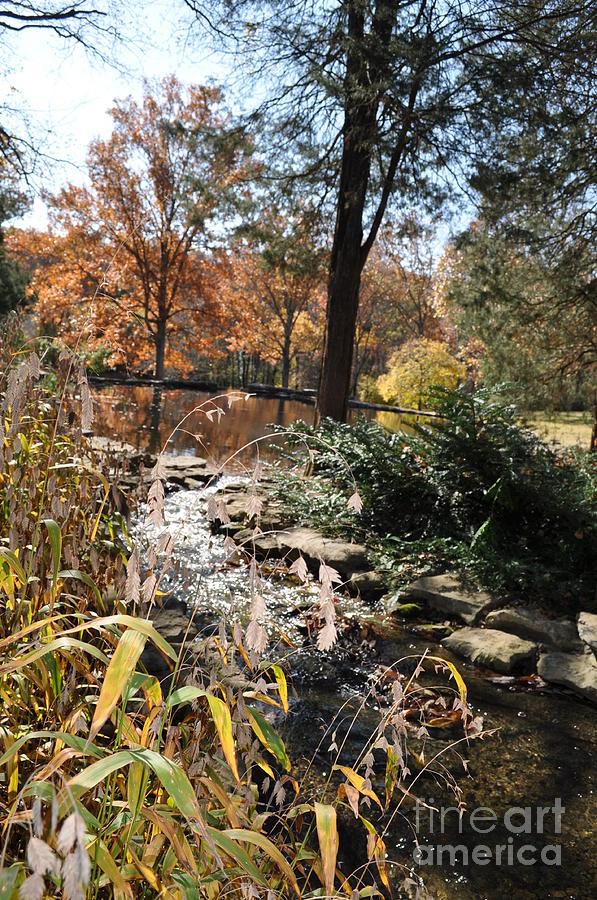 Cheekwood Gardens Photograph - Creek by Denise Ellis